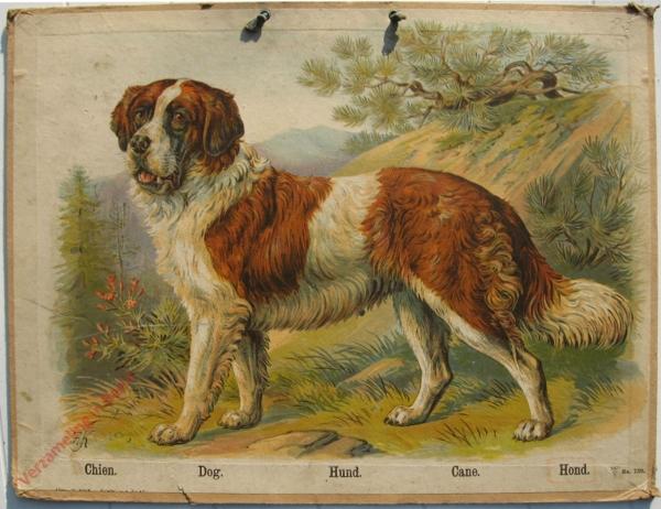 730 - Chien, Dog, Hund, Cane, Hond